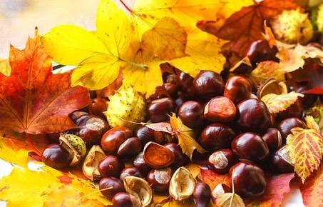duurzame decoratie herfst