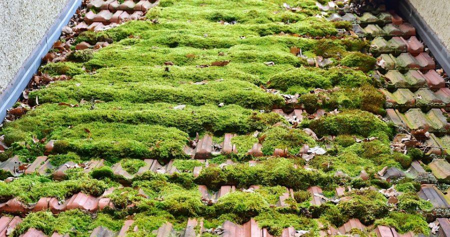 groen dakdekking